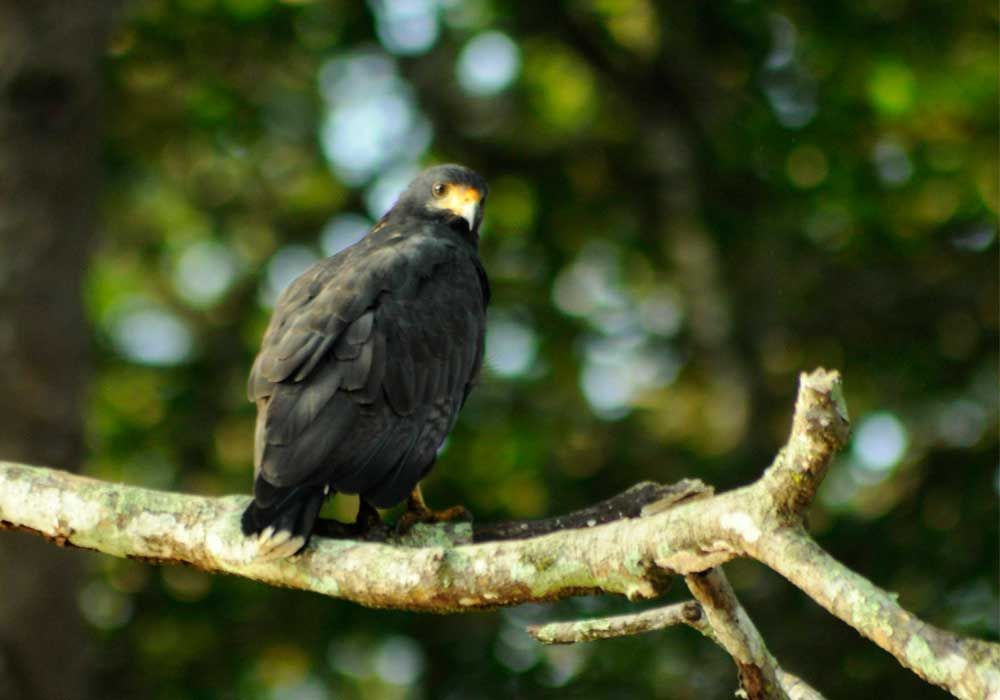 Eco Jungle cruises puntarenas bird watching
